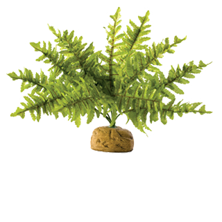Picture for category plants plastic